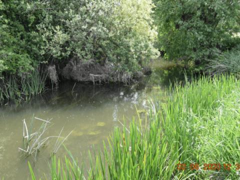 River Thame – Shabbington Island